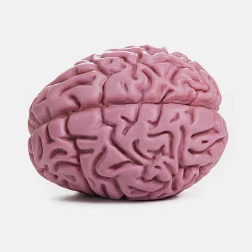 Brain-plan-view-512-