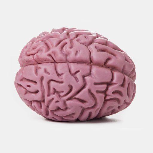 Brain-plan-view-flipped-512-